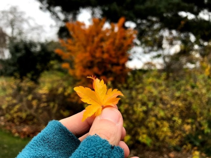 Outdoor Nature Activities for Adults_leaf pressing