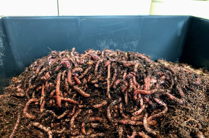 Starting a Worm City Wormery
