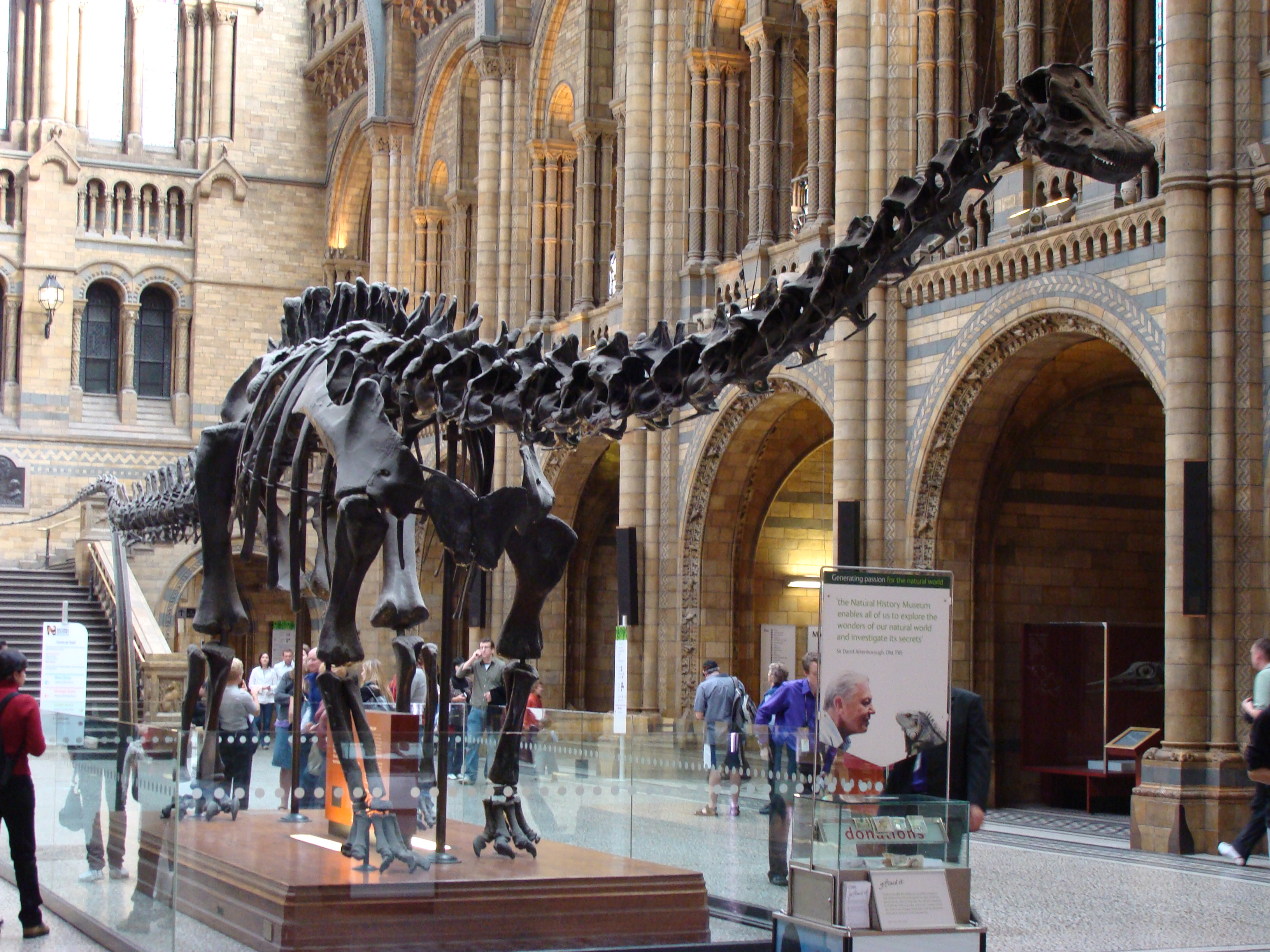 Dippy the Dinosaur - The Natural History Museum
