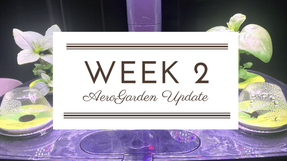 AeroGarden Update: Week 2