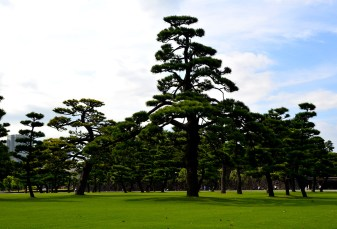 Imperial Palace gardens, Tokyo