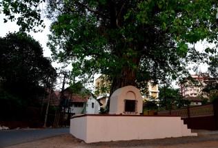 Concrete flats behind the little Naga shrine beneath a Peepal tree.