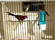 Bird Market 2