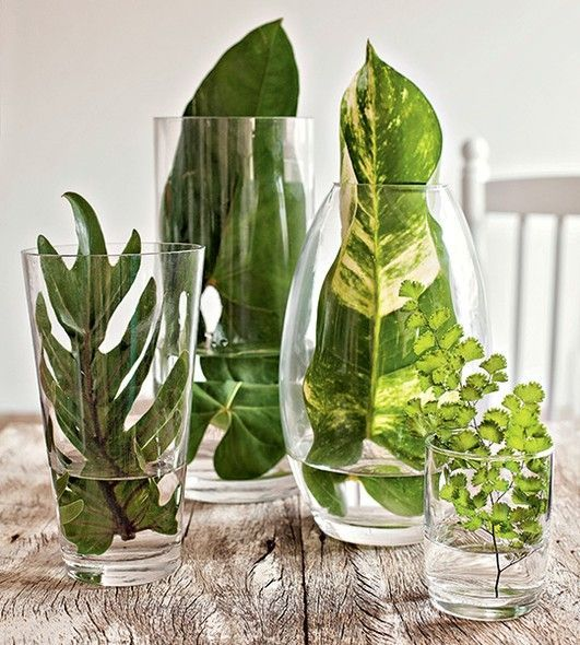 Leaves in glass vases