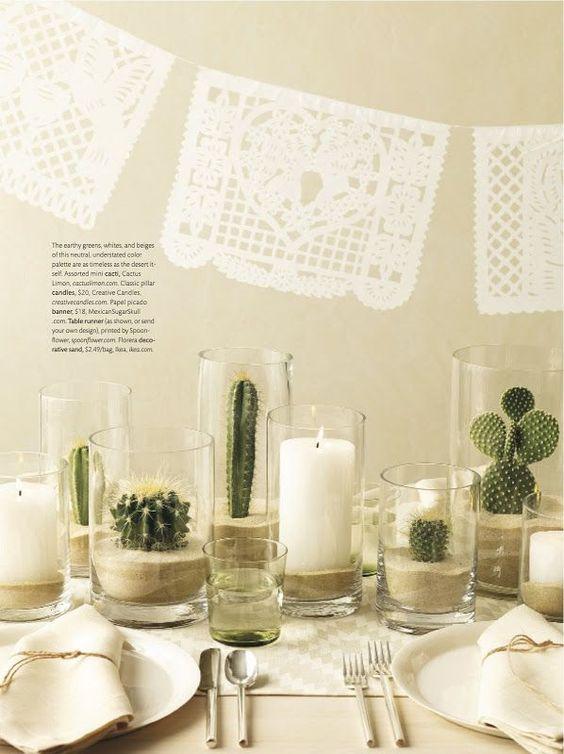 Cactus in glass vases
