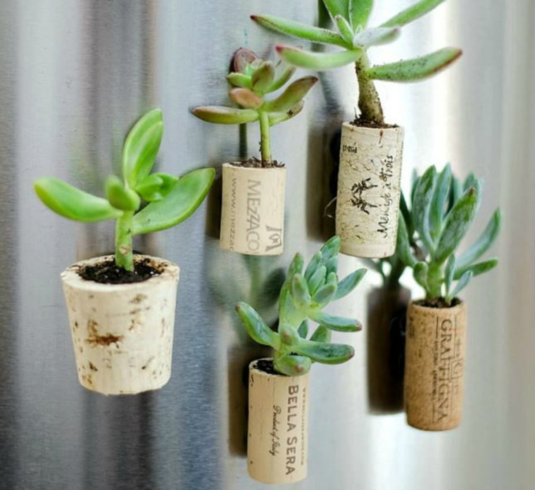 succulent cork