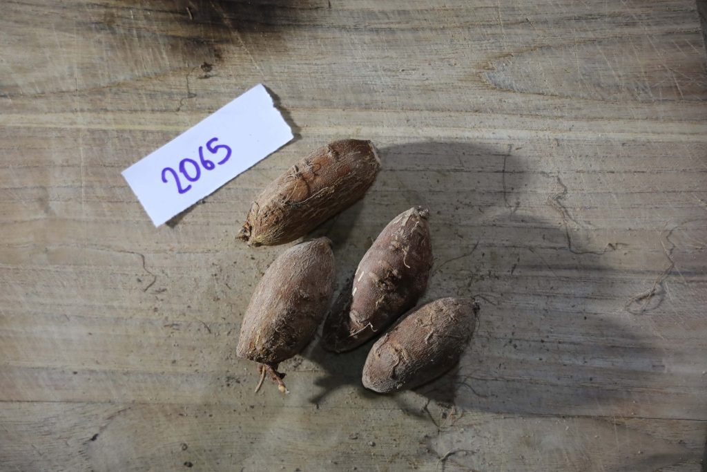 Groundnut-Trial-2065