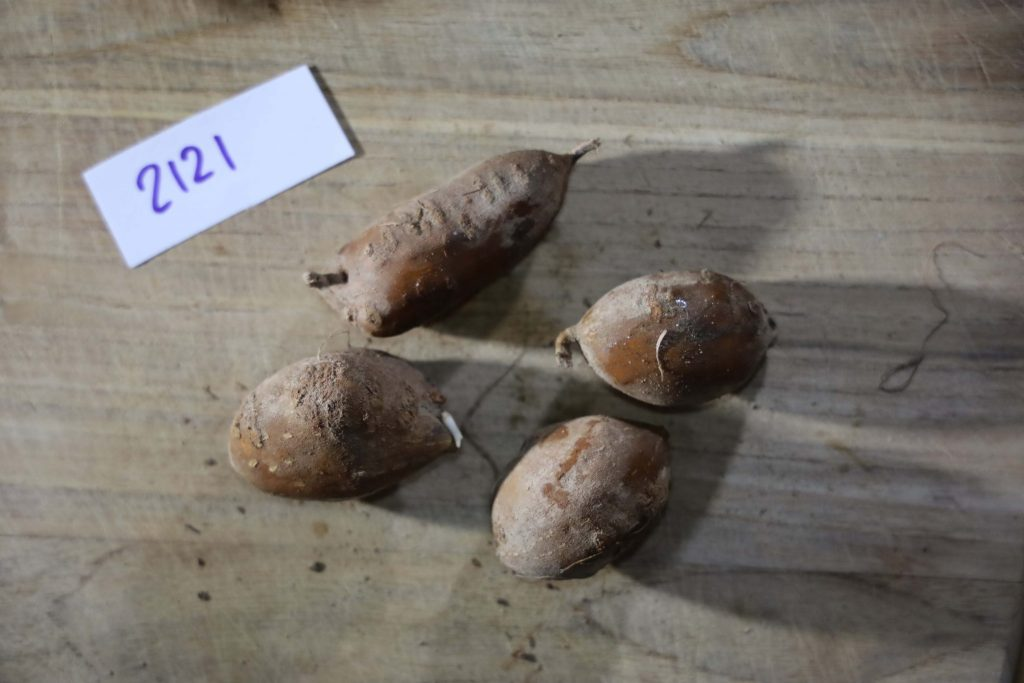 Groundnut-Trial-2121