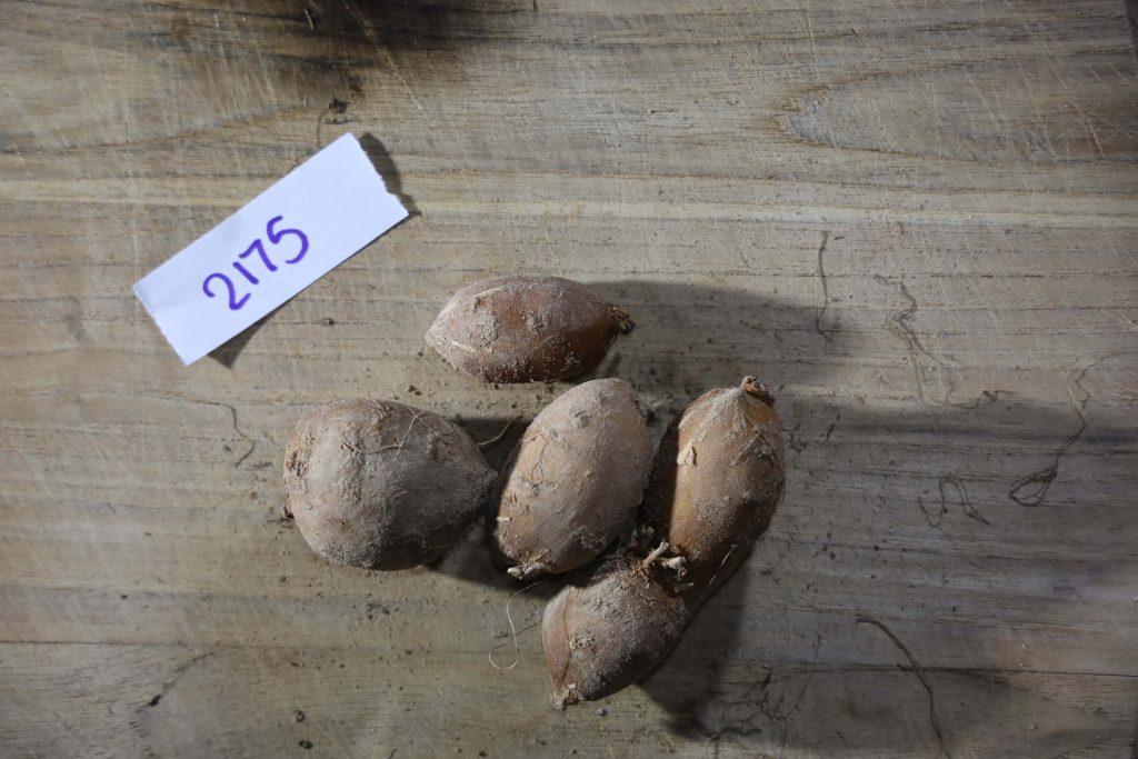 Groundnut-Trial-2175