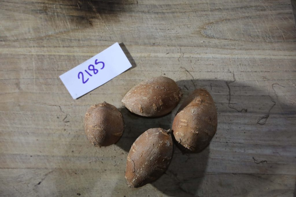 Groundnut-Trial-2185