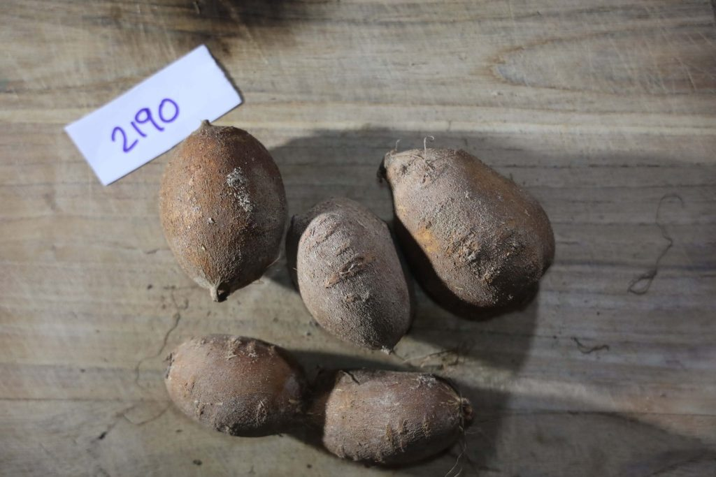 Groundnut-Trial-2190