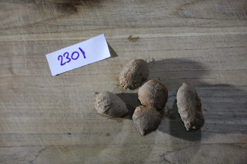 Groundnut-Trial-2301