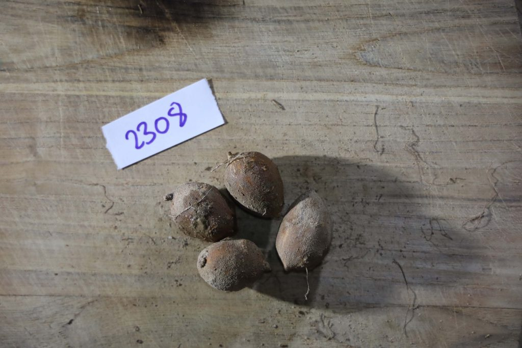 Groundnut-Trial-2308