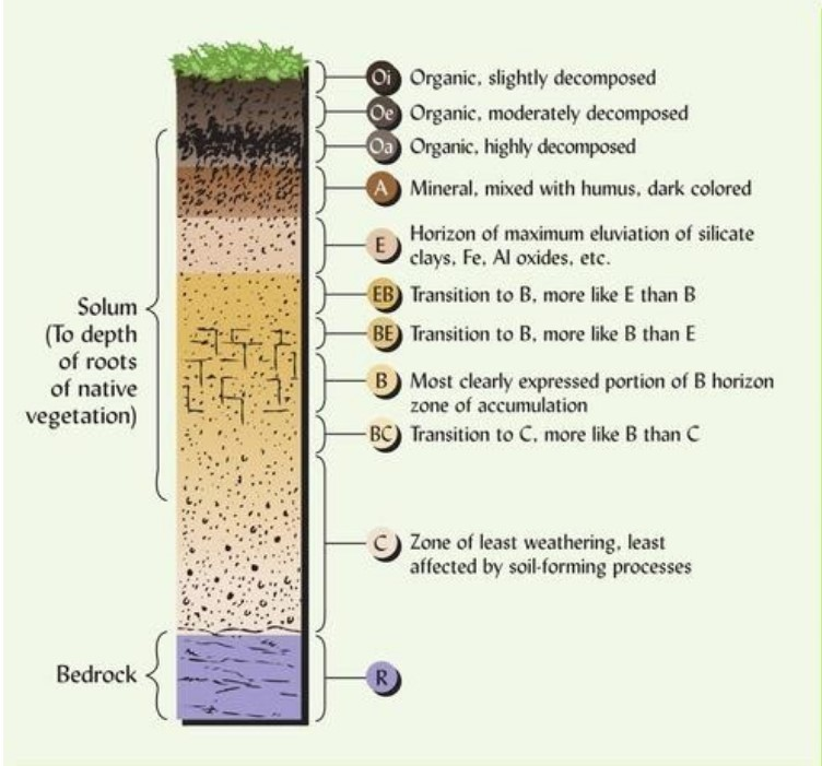 Soil Master Horizon Key