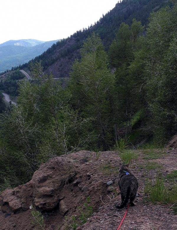 The same mountain pass from a different angle, with part of the road descending in the background. Major Tom, trailing his leash, is looking off to the side with ambivalent ears.