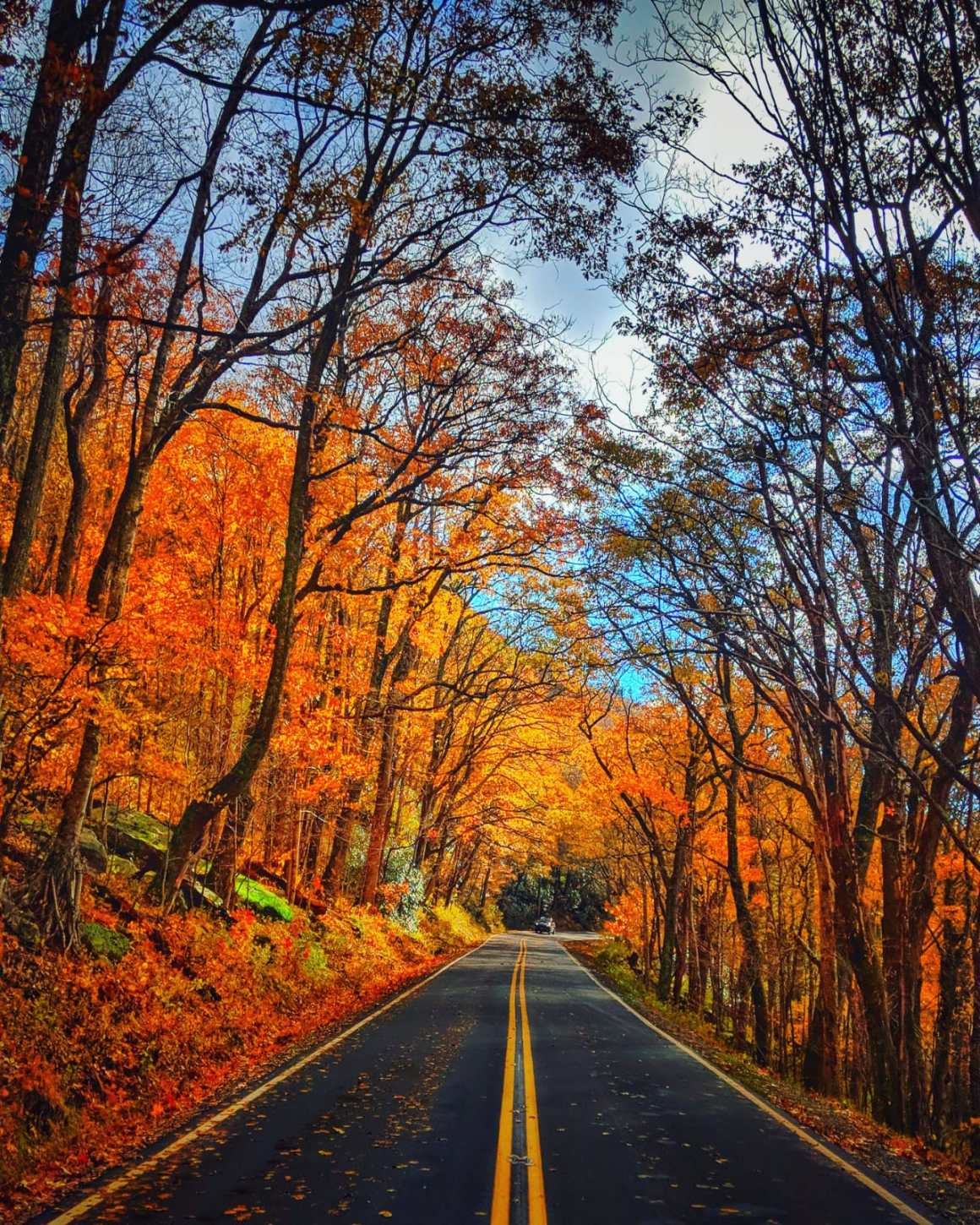 Falling for Fall, Blue Ridge Parkway