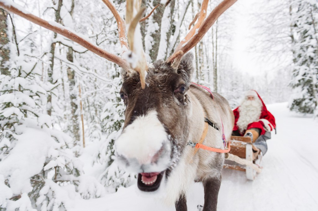 Santa Claus enjoying a reindeer sleigh near Rovaniemi in Lapland, Finland.