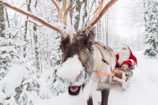 Santa Claus enjoying a reindeer sleigh near Rovaniemi in Lapland, Finland.