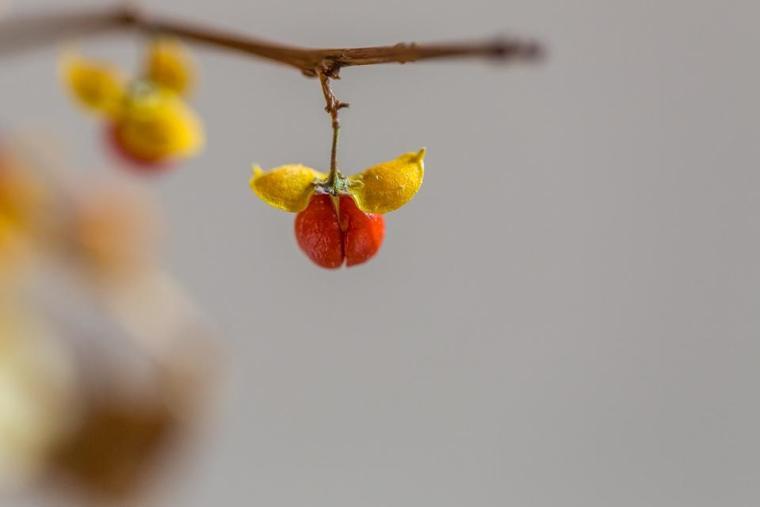 poetry, blog, vine, branches, clematis, heuchera, John 15