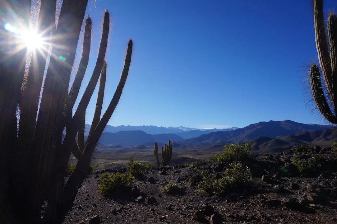 The Valle de Elqui as seen through the cactus.