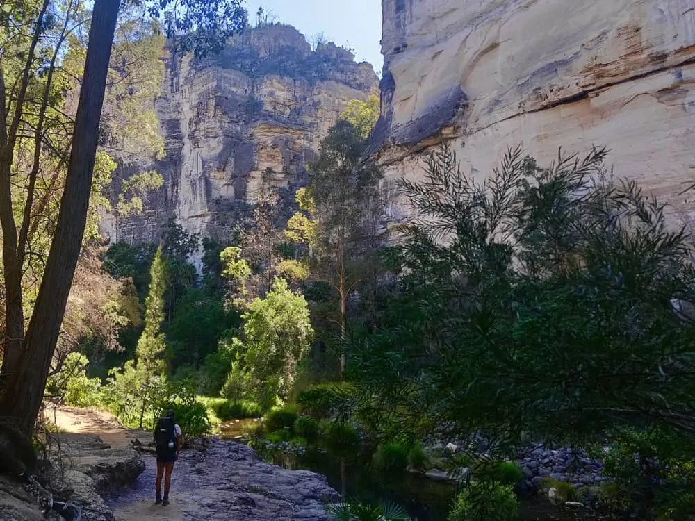 Take time to stop and admire the beauty of the Carnarvon Gorge Main Gorge Track