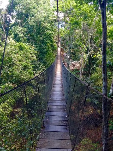 A swinging canopy bridge made of wood and string in the Amazon rainforest at the Treehouse Lodge Peru