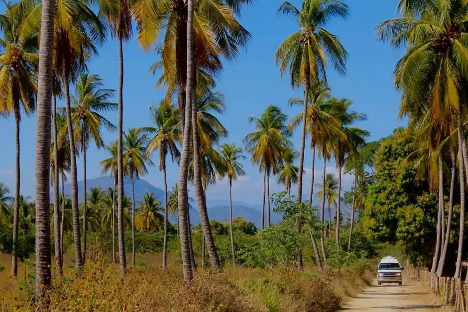 Van driving down a dirt road through the palm trees