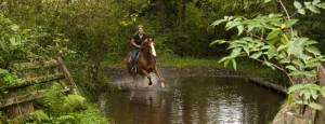 horseback