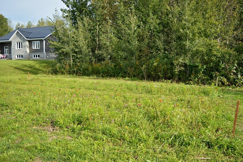 How to grow a wildflower meadow in eastern ontario