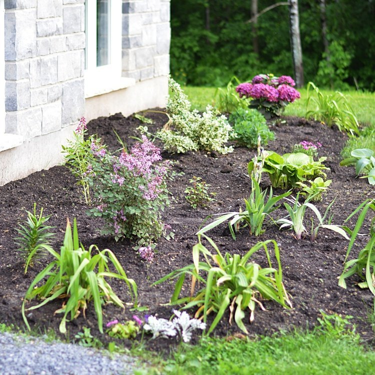 My tips for designing and planting a low maintenance flower bed tips for planning and creating a new perennial flower bed tips for beautiful garden design mightylinksfo