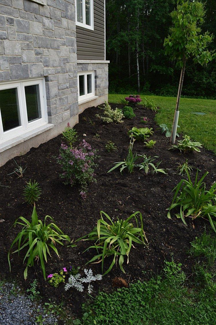 plan a perennial flower garden