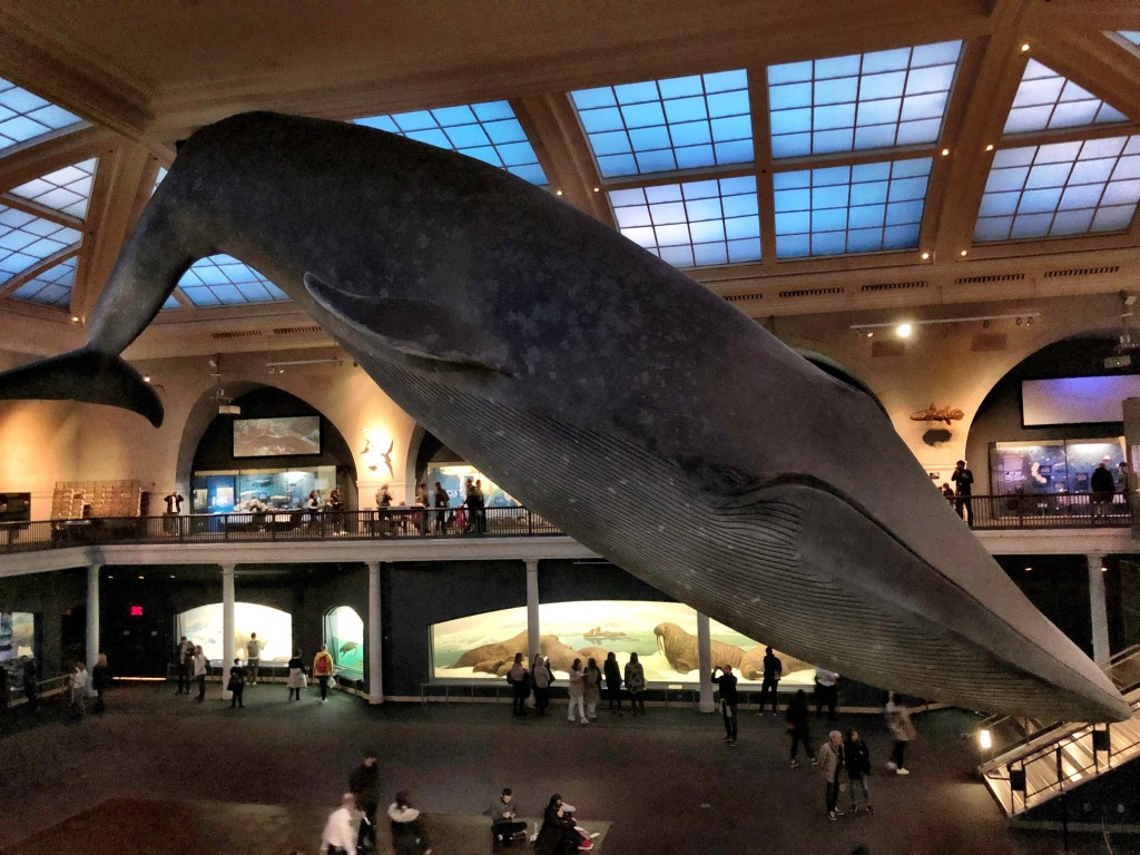 Huge Whale in Natural History Museum