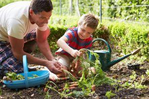 Gardening Sheers Pic