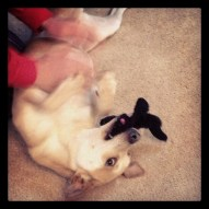 I get my belly rubbed while playing