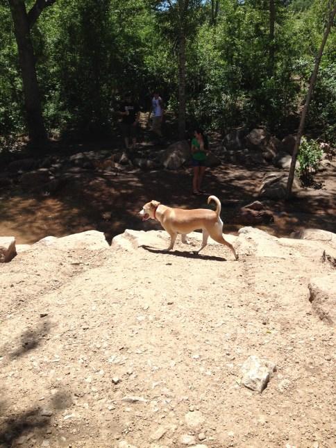 Dali at the Dog Park near the creek