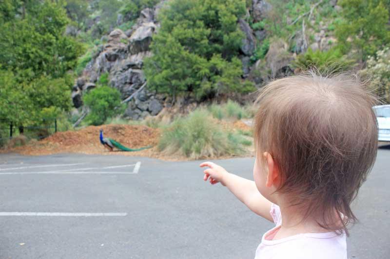 tasmania-road-trip-gorge