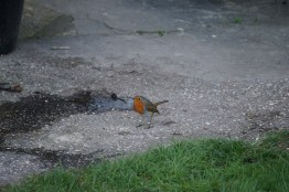 Mr robin