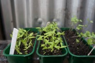 seedlings growing well
