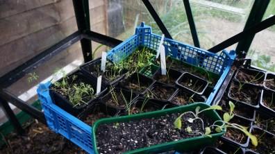 A few seedlings