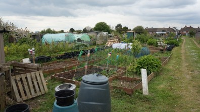 A view over the allotment