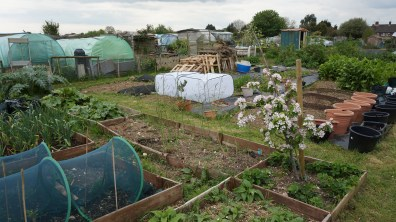 Another view over the allotment