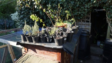 Potted on plants