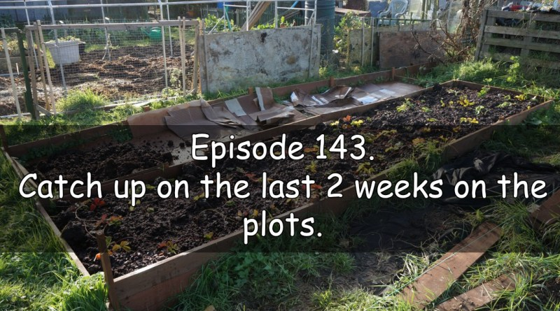Episode 143 from the veg grower podcast. catch up on the last 2 weeks on the plots.