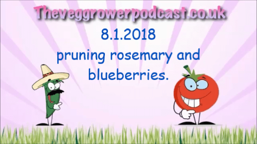 Join me in this video from the veg grower podcast where I prune my rosemary and blueberries
