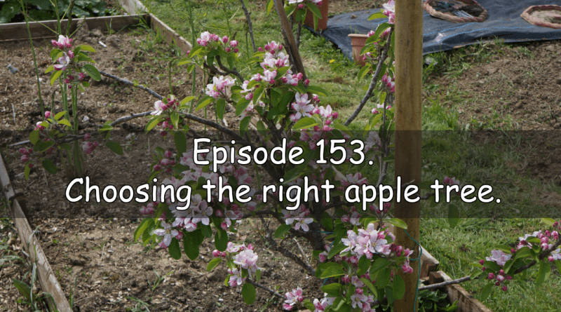 Join me in episode 153 of the veg grower podcast where I discuss choosing the right apple tree.