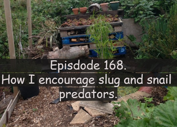 Join me in this week's podcast where I discuss how I encourage slug and snail predators into my allotment and vegetable patch.