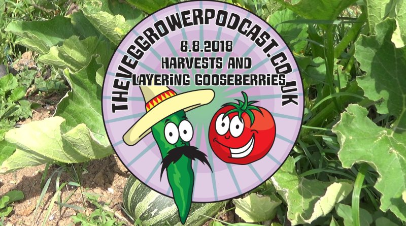 In this week's video from the ve grower podcast I have harvested lots of food as well attempting to layer gooseberries.
