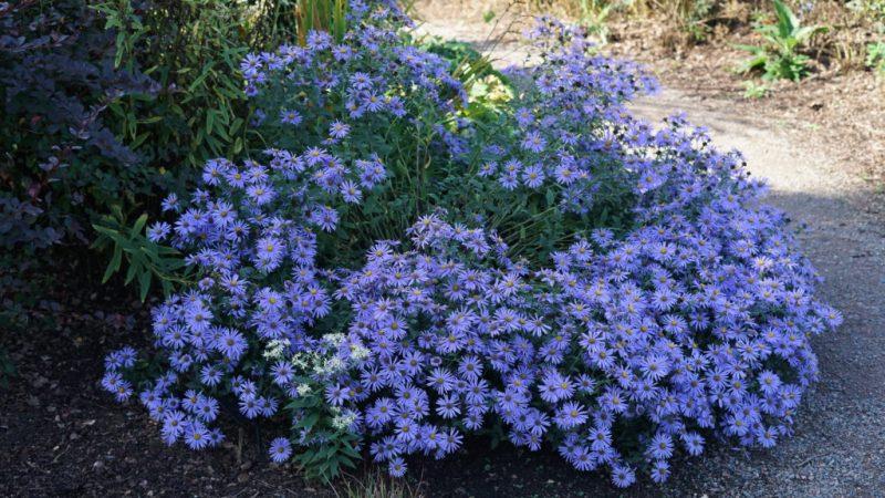 A lovely purpley flower