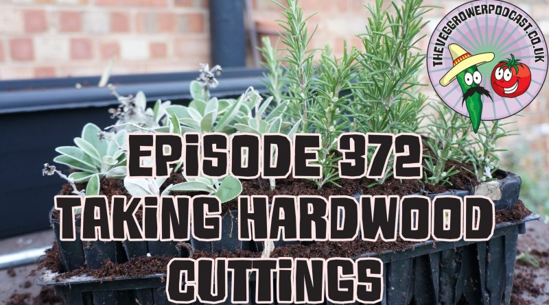 Join me in this podcast where I have taken some hardwood cutting of my herb plants and I discuss how I have learnt to be more succesful with my cuttings. I also share the latest from my plots.