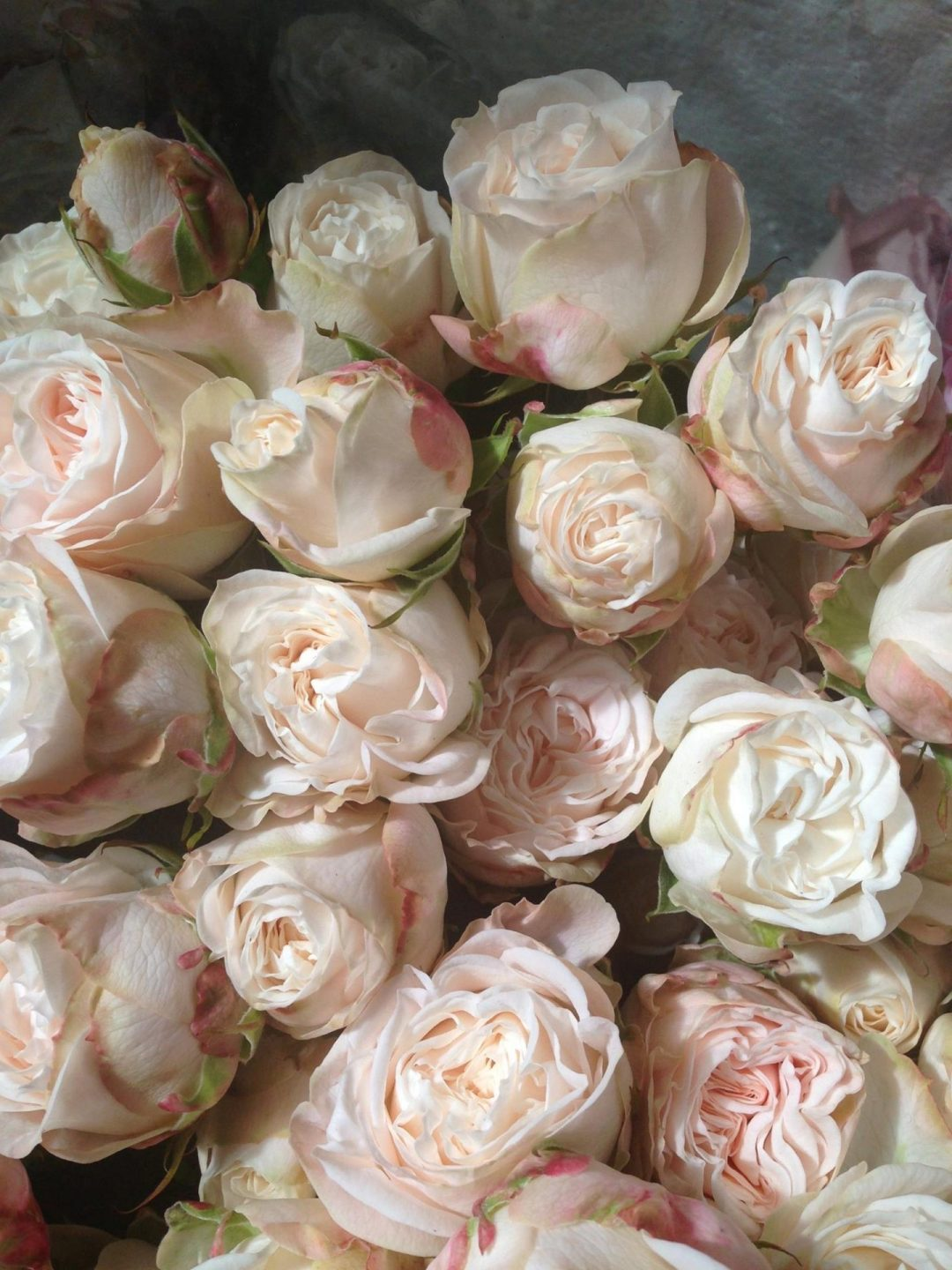 pale pink roses wedding flowers